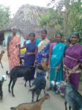 Another group of women benefited by goat rearing
