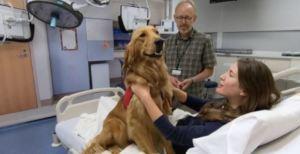 PawPrint dog & patient