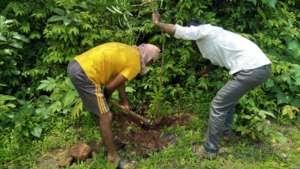 Preventive measure increase Plant Survival chances