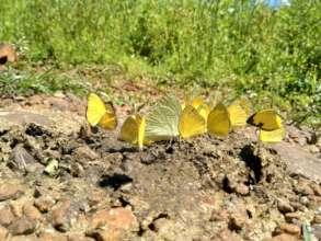 Exclusive behaviour of Butterflies near Homestay