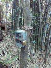 Trap Camera