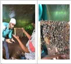 HoneyBee Farm Visit and Handling Observation