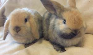 Flip and Flop were saved from an animal hoarder.