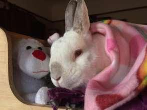 Luke loves his little bunny bed.