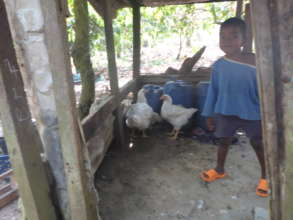 Existing poultry