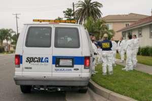 spcaLA investigates