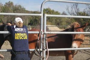 spcaLA Responds to Sand Fire