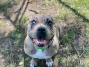 Jewels in adoptions