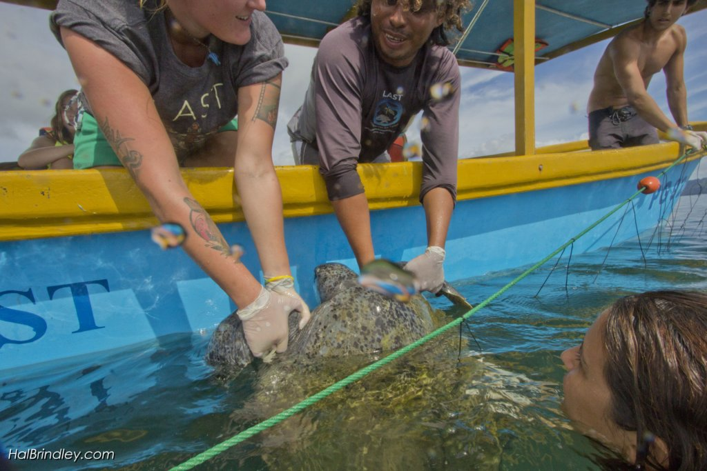 Sea Turtle Center Needs Boat Motor for Rescue