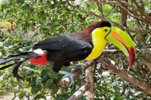 Touca with that funky beak!