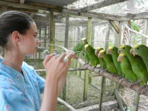 Ariane feeding this year's yellowhead babies