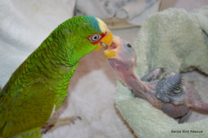 Sancho feeding one of our babies