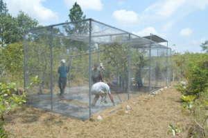 Enclosure refurbish in Payne's Creek