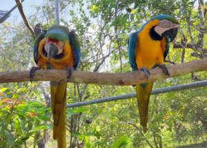 Sanctuary macaws at BBR