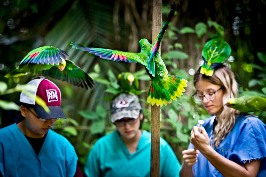 Help keep Belize Bird Rescue up and running
