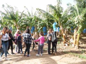 In the Banana plantation
