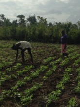 women working to produce local food for security