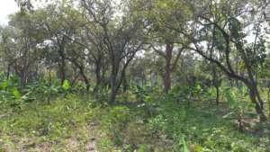 Ugandan Agroforestry System