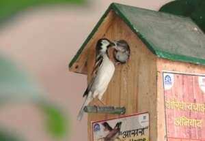 Happy World Sparrow Day !!