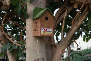 Sparrow eco-friendly nests