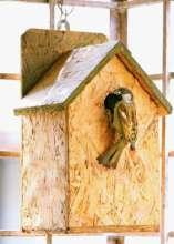 Sparrow Birds Home