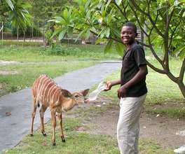 Child feeding Rusty our young Nyala