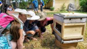 Watching the bees in special hive