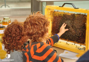 Educational programs for future beekeepers