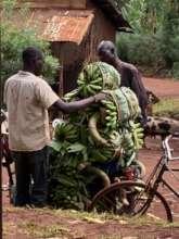 Preparing to take crops to market