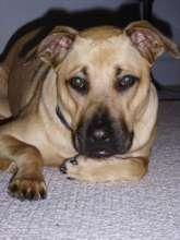 Abby's Lucy whom we helped. Mommy misses you....