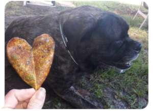 Henry with his heart-shaped leaf on his day....