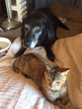 Sweet Sophie with her best friend, Kitty