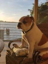 Lennie, watching the sunset....