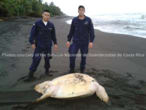 coastguards find a turtle targeted by hunters