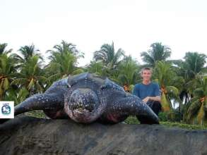 Protect endangered sea turtles in Costa Rica