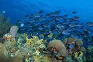 The Ocean Agency / Coral Reef Image Bank