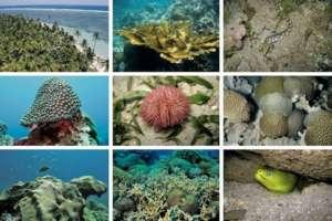 Creatures of the Veracruz Reef