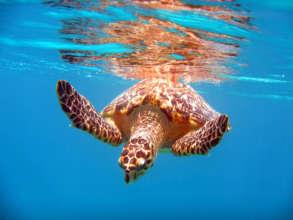 Migrating sea turtles seek shelter at Cabo Pulmo