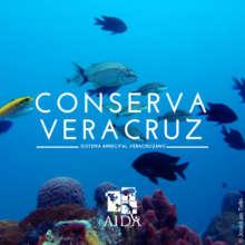 AIDA's public campaign to protect Veracruz