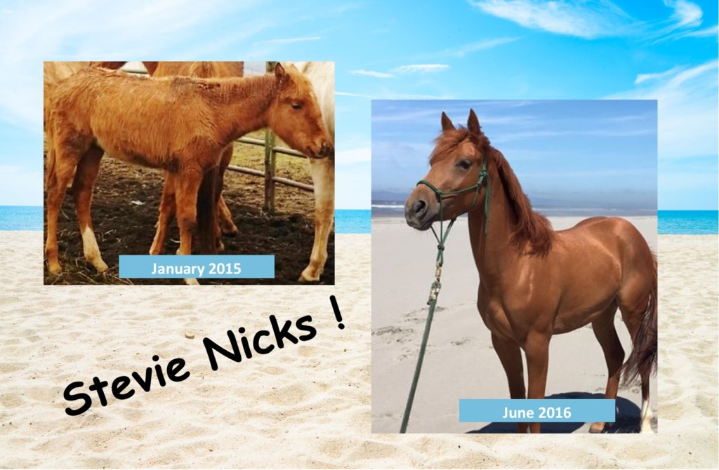 Sponsor Stevie Nicks!