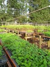 One of the community nurseries (Photo: IPE)