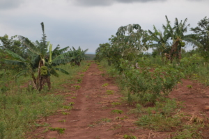 An agroforestry site that the researchers visited