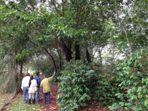 Researchers visit agroforestry sites