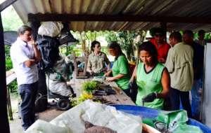 Seedlings being prepared for planting