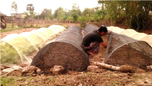 80 Khmer farmers to grow vegetables all year