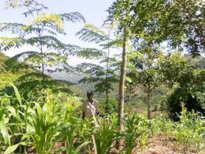 Agroforestry: Abdallah from Mgambazi growing maize