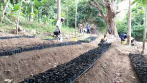Tree seedlings at a seedling nursery.