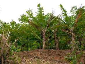 Agroforestry system on a farm in Choma village.