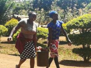 Mango harvesting by women