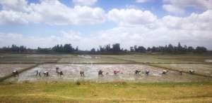 women planintg rice